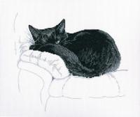 M668 Среди черных котов