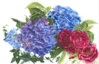 442 Hydrangea & Rose