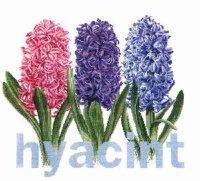 434 Hyacinth