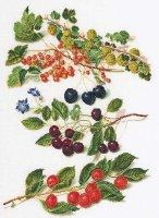 3063 Cherries