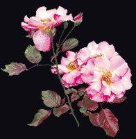 412-05 Rosa Leersum (black)