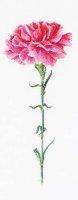 467 Carnation Pink