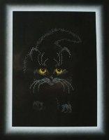 351 Черный кот
