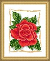 ЦВ-005 Прекрасная роза